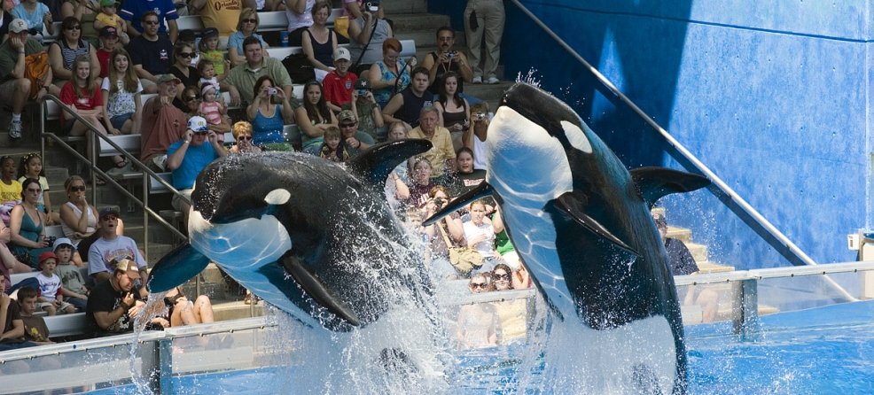 What you should know about dolphinariums